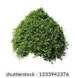 bush isolated on white... | Shutterstock . vector #1233942376