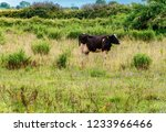 cow in natural environment with ... | Shutterstock . vector #1233966466