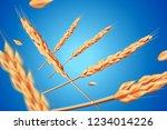 Realistic Wheat Oats Elements....