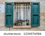 Cat on window. The historic quarter of the district of San Giuliano, Rimini (Borgo San Giuliano), also known as the quarter Fellini in Rimini, Italy.
