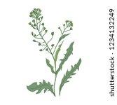 shepherd's purse flowers or... | Shutterstock .eps vector #1234132249