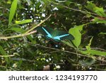 emerald swallowtail butterfly ... | Shutterstock . vector #1234193770