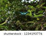 emerald swallowtail butterfly ... | Shutterstock . vector #1234193776