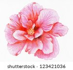 pencilled flower of pink... | Shutterstock . vector #123421036