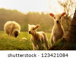 Stock photo spring lambs 123421084