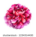 red peony isolated on white...   Shutterstock . vector #1234314430