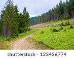 Path in the pine forest, carpathian