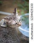 soft focus head brown tabby cat ...   Shutterstock . vector #1234425133