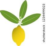 lemon and flower cluster   Shutterstock .eps vector #1234499023
