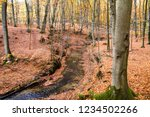 a stream in a beech forest in... | Shutterstock . vector #1234502266