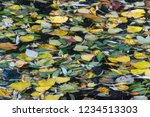 dropped colored leaves in the... | Shutterstock . vector #1234513303