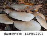 closeup of mushrooms and leaves. | Shutterstock . vector #1234513306