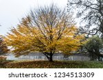 tree with yellow autumn leaves... | Shutterstock . vector #1234513309