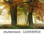 footpath through avenue of oak...   Shutterstock . vector #1234550923