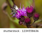 a solitary bee covered in...   Shutterstock . vector #1234558636