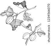 vector. black and white... | Shutterstock .eps vector #1234566070