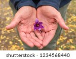 flowers of saffron collection.... | Shutterstock . vector #1234568440