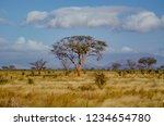 solitary tree landscape in... | Shutterstock . vector #1234654780