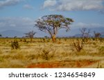 solitary tree landscape in...   Shutterstock . vector #1234654849