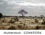 solitary tree landscape in...   Shutterstock . vector #1234655356