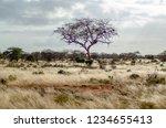 solitary tree landscape in...   Shutterstock . vector #1234655413