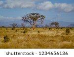solitary tree landscape in...   Shutterstock . vector #1234656136