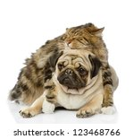 Stock photo the cat hugs a dog isolated on white background 123468766