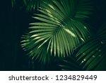 Tropical Palm Leaf  Green...