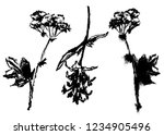 drawing elements set of meadow... | Shutterstock .eps vector #1234905496