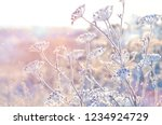 Frozen Grass In Frost Day....