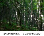mountain forest for your design | Shutterstock . vector #1234950109