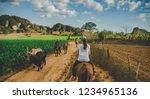 vinales  cuba. february 28 ... | Shutterstock . vector #1234965136