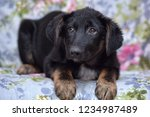 scared pooch puppy lying on the ... | Shutterstock . vector #1234987489