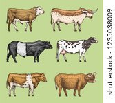 farm cattle bulls and cows.... | Shutterstock .eps vector #1235038009