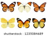 Stock photo set of six differently yellow colored butterfly isolated on white background 1235084689