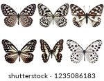 Stock photo set of six black butterflies with white spot on wing isolated on white background 1235086183