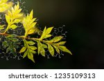 plants background with... | Shutterstock . vector #1235109313