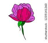flower peony illustration | Shutterstock . vector #1235141260