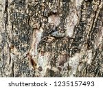 old tree in the park | Shutterstock . vector #1235157493