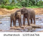 hugging elephants in the river... | Shutterstock . vector #1235166766