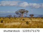solitary tree landscape in...   Shutterstock . vector #1235171170