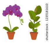 houseplant   young ficus... | Shutterstock .eps vector #1235181610