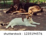 cat and dog. a dog and a cat... | Shutterstock . vector #1235194576