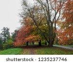 colorful autumn trees in a park ... | Shutterstock . vector #1235237746