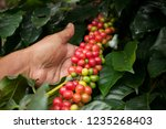 keeping fresh coffee . | Shutterstock . vector #1235268403