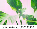close up of green leaf on... | Shutterstock . vector #1235272456