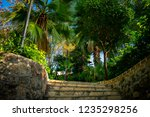low angle view of of tropical... | Shutterstock . vector #1235298256