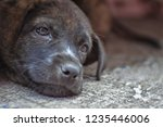 puppy on concrete | Shutterstock . vector #1235446006