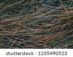 Frozen Grass Texture  Grass...