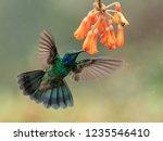 hummingbird in costa rica | Shutterstock . vector #1235546410